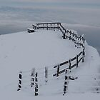 Mt Rigi Fenceline by Frank Donnoli