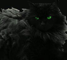 Salem by kimbarose