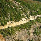 Path along the cliffs by Rosalie M