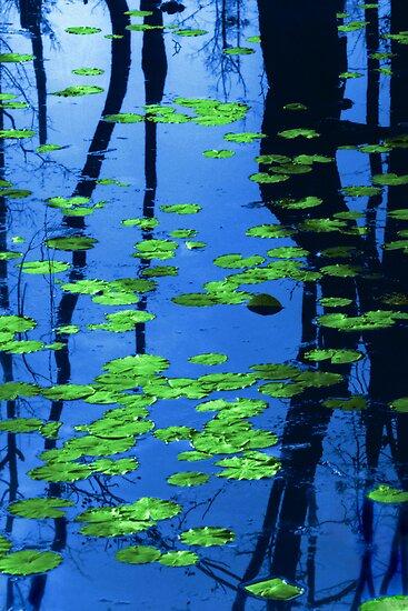 lilypads by J.K. York