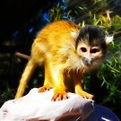 Squirrel Monkey by Nicolas Raymond