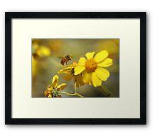 Pollinated Framed Print