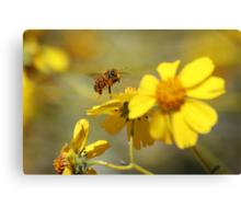 Pollinated Canvas Print