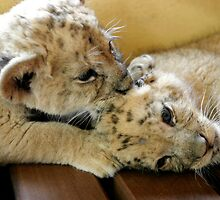 Cub kisses by Kyra  Webb
