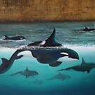 Orcas at Bridgewater by Viona Pfeiffer