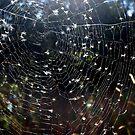 spiderwebs by LisaMichelle