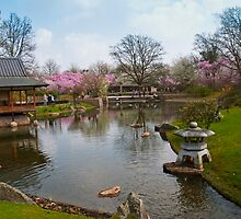 Japanese Garden - Hasselt, Belgium by Alison Cornford-Matheson