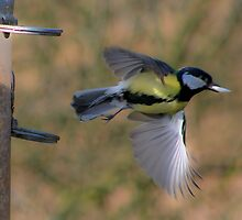 Great tit....... by jdmphotography