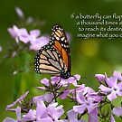 Butterfly on Phlox by Bonnie T.  Barry