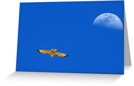 Red-tailed Hawk ~ Flight of the moon by Kimberly P-Chadwick