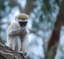 Baby Vervet Monkey by DanielTMiller