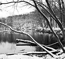 Rocky River Metroparks: I  by Rachel Counts