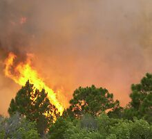 Indrio Savannahs woods fire by Larry  Grayam
