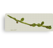 Twig Study in Watercolour Canvas Print