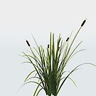 Reed Plant by dmark3