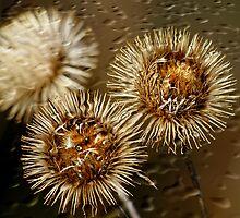 Dried Flowers by Deborah  Benoit