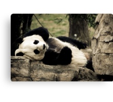 Mei Xiang @ The National Zoo Canvas Print