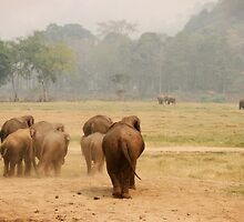 Elephant landscape by Kyra  Webb