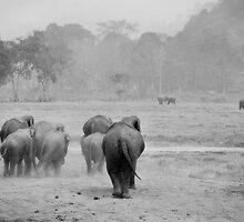 Elephant landscape in B&W by Kyra  Webb