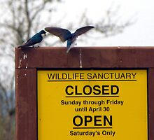 That Sign is for Them Not Us!  We're the Wildlife!  by Chuck Gardner