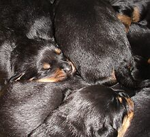 Rottweiler Puppies by taiche