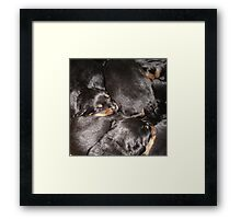 Rottweiler Puppies Framed Print
