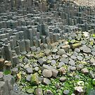 The  Giant's Causeway  by Finbarr Reilly
