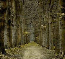 Path of no Return by LarsvandeGoor