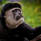 Black & White Colobus by Natalie Manuel