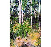 Cycads - outback paradise Photographic Print