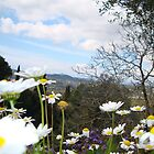 The view of Corfu,  through the wild flowers of spring  by fruitcake