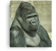 West Lowland Silverback Gorilla Canvas Print