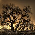 Tree by Will Talley