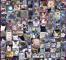 photo some of my cats i rescue by jamilkucing