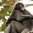 Monkey cuddles. by elphonline