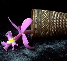 mini orchid by picketty