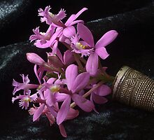 miniature orchid spray by picketty