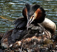 Mummy Grebe by jesika