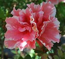 Double pink Azalia by Brandie1
