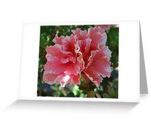 Double pink Azalia Greeting Card