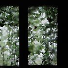 ivy window by Annemie Hiele