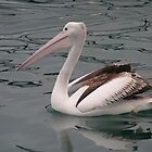Pelican by sweetcorn