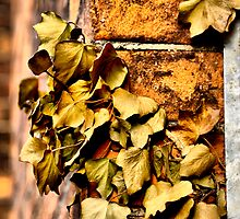 Faded Ivy by Karen  Betts
