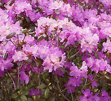 My Neighbors Purple Rhodie by Loisb