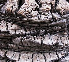 Date Palm Bark by Anthony DiMichele