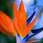 Bird of Paradise by Bev Woodman