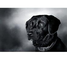 Black Lab Portrait - in Black & White Photographic Print