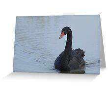 Black Swan At Dusk Greeting Card