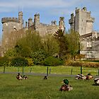 Dromoland Castle Duck walk! by upthebanner
