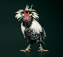 Bearded Silver Lace Polish Bantam by Norman Schwartz